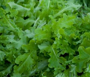 LettuceSaladBowl1