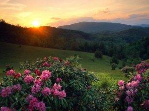 paisagens-com-flores-15