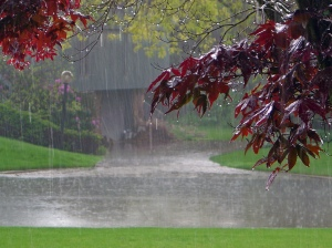 Rain-Falling-Background