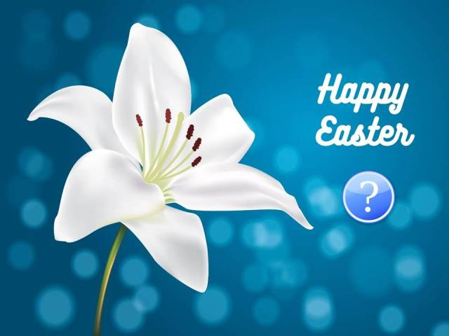 easter-lilly-vector question