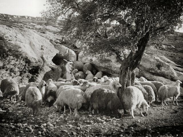Natural sheepfold at Ras el Ein, mat02985